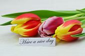 Have a nice day card with three colorful tulips