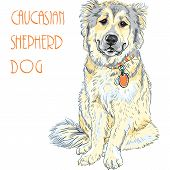 Caucasian Shepherd Dog breed