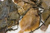 stock photo of flounder  - Plenty of fresh raw flounder fish in supermarket - JPG