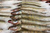 Fresh Raw Fish In Supermarket