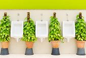 foto of urinate  - The modern style decorative restroom interior design with white urinal row and green ornamental plants - JPG