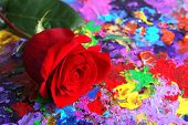 Beautiful red rose on colorful abstract background