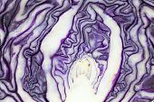Pattern Of Purple Cabbage