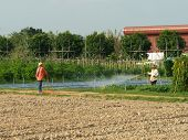 picture of pesticide  - Worker spraying pesticide on vegetable bed amidst the strong sunlight - JPG