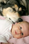 picture of baby dog  - A black German Sherpherd mix dog is lovingly kissing a newborn baby girl - JPG