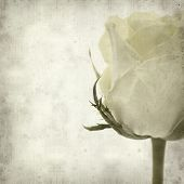 stock photo of pale  - textured old paper background with pale yellow rose flower - JPG