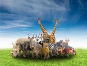 stock photo of herbivore animal  - group of africa animals with green grass and blue sky - JPG