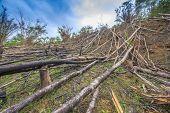 image of deforestation  - Deforestation environmental problem as rain forest jungle destroyed for human development - JPG