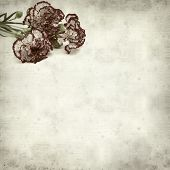 image of carnation  - textured old paper background with variegated carnation flower - JPG
