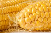 foto of corn  - Dried corn close up - JPG