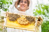pic of beehive  - Beekeeper controlling beehive and comb frame  - JPG
