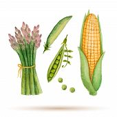stock photo of pea  - Set of watercolor vegetables corn asparagus green peas - JPG
