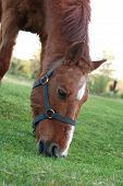 picture of horses eating  - Evening farm - JPG