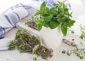 stock photo of oregano  - Fresh green herbs - JPG