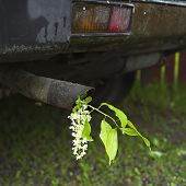 stock photo of exhaust pipes  - Closeup of a car exhaust pipe with twig of bird-cherry tree in it concept of nature damage