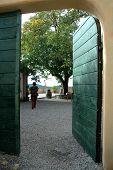 Open Door With Tree