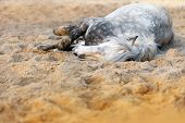 Постер, плакат: Beautiful white horse receives a bath of sand