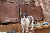 Street Cat in Bins poster