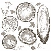 ������, ������: Gray Cross Section Of Tree Trunk And Leaves Set