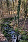 Frankfurt-Stadt-Wald-stream