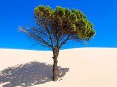 Tarifa de la duna de arena