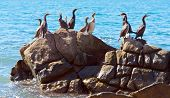 cormorants on stone in sea water