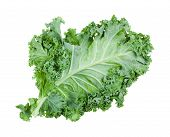 Single Green Leaf Of Curly-leaf Kale (leaf Cabbage) Isolated On White Background poster