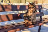 Beautiful Cat Sits On A Bench. The Cat Froze On The Street In Winter. Tabby Cat On A Winter Sunny Da poster