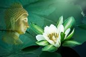 White Water Lily Flower With Yellow Stamens In Bloom And Close Up Surrounded By Big Green Leaves Flo poster