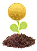 Money growth. Golden coin growing from soil. Financial metaphor.