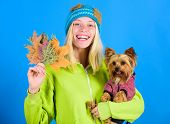 Pet Health Tips For Autumn. Girl Hug Cute Dog And Hold Fallen Leaves. Woman Carry Yorkshire Terrier. poster