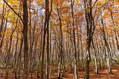 Colorful Trees In Forest. Autumn Foliage Scenery View, Full Of Magnificent Colours In Red, Orange, A poster