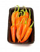 Orangr scharfe Paprika isoliert auf weißem Hintergrund