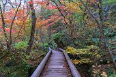 Oirase Stream Pathway, Beautiful Fall Foliage Scene In Autumn Colors. Forest, Flowing River, Fallen  poster