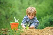 The Child Is Digging The Ground. Hobby. Work In The Garden. The Child Sits Plants. Farm. Organic Veg poster