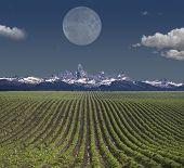 Montana USA Farm