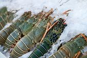 stock photo of lobster tail  - Fresh lobsters on ice for sale at restaurant - JPG