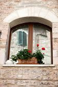 The Flowers on the old Tuscan Window