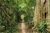 Tropical rainforest path in Angkor forest, Cambodia