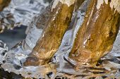 Nature Abstract - Encased In Ice