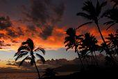 Palms Against A Sunset Sky