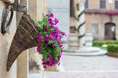 Flowers at Marketplace in Pienza, Tuscanyuscany