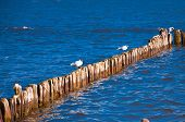 Seagulls Sitting On The Breakwater