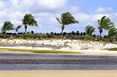 picture of rn  - Brazil RN Pititinga Beach at low tide with colored grass stripes and palms at background - JPG