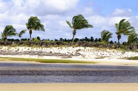foto of rn  - Brazil RN Pititinga Beach at low tide with colored grass stripes and palms at background - JPG