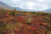 image of taimyr  - The end of summer gives fancy paint Taimyr tundra - JPG