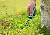 stock photo of hoe  - using a gardening tool in the garden - JPG