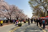 SEOUL, KOREA-APRIL 19: The ninth Yeouido Spring Flower Festival is being held in Yeouiseo-ro on Apri
