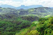 Mountains on island of Sri Lanka covered forest