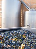 stock photo of fermentation  - cabernet sauvignon vinemaking with grapes and Fermentation stainless steel tanks vessels - JPG